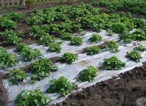геотекстиль для защиты от сорняков