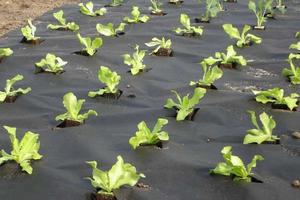 Укладка геотекстиля против сорняков