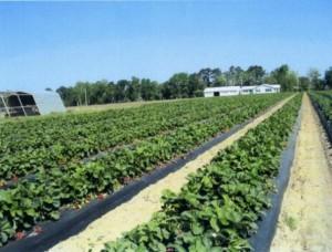 геотекстиль в сельском хозяйстве