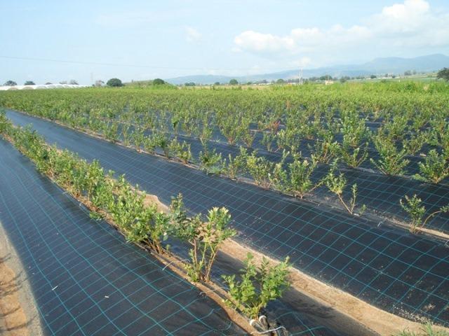 Агропленка – оптимальное покрытие для дачного огорода