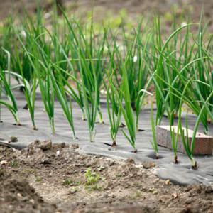 использование геотекстиля для сада и огорода