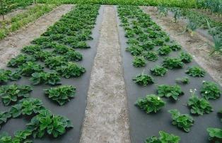 Как выбрать агроволокно