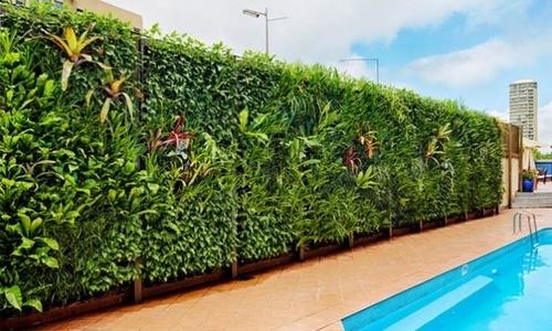 Как выполнить вертикальное озеленение