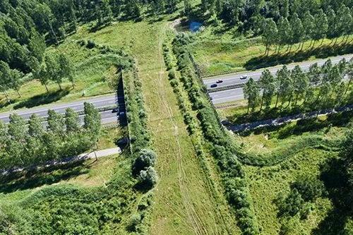 Подземный экодук появится на скоростной трассе М-11 Москва-Санкт-Петербург