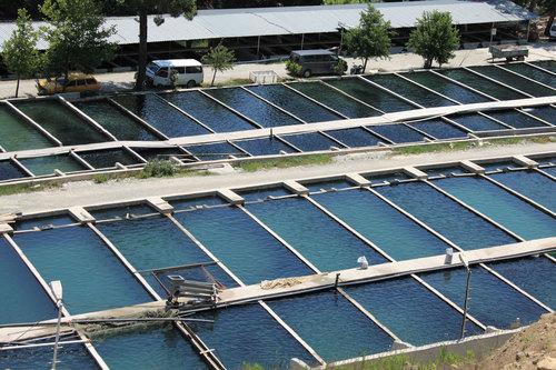 Рыбные фермы и питомники – особенности строительства и эксплуатации