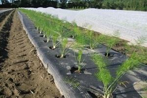 Дорнит для укрытия растений
