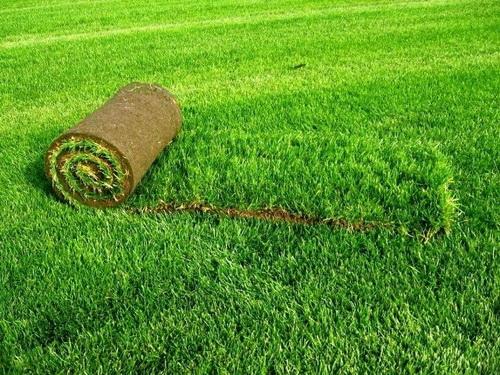 Применение биоматов в обустройстве газонов